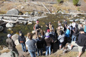 Yellowstone stream ecology talk
